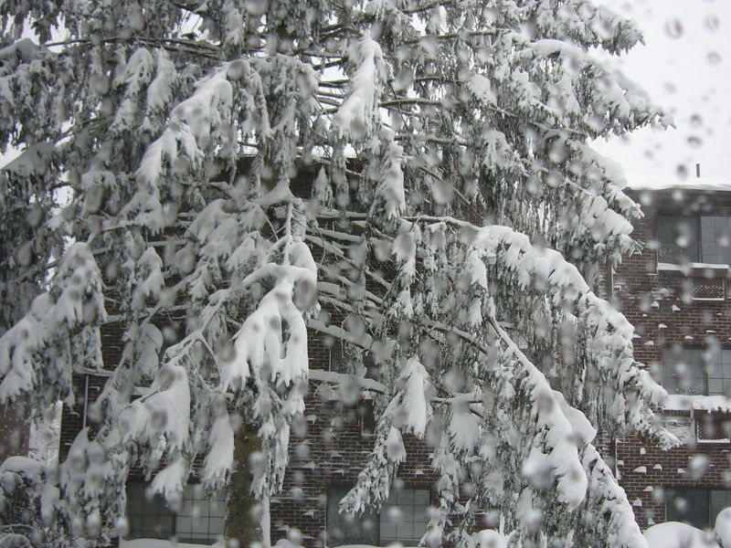 Snow-2011 (1)