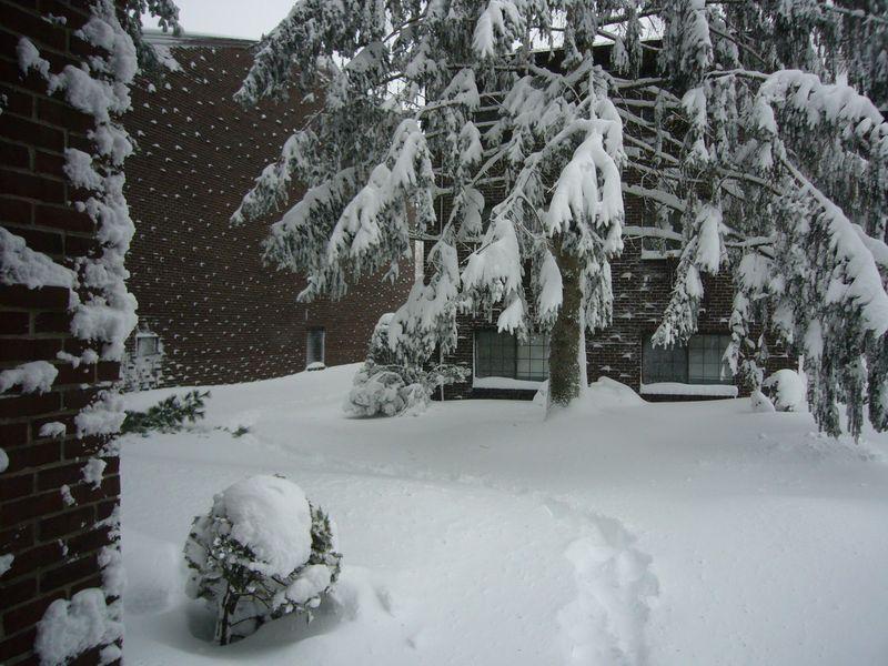 Snow-2011 (6)