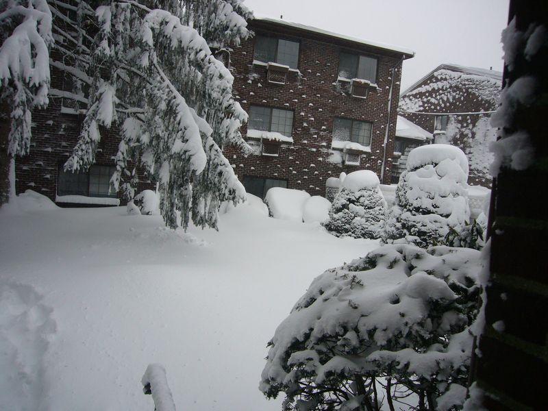 Snow-2011 (7)