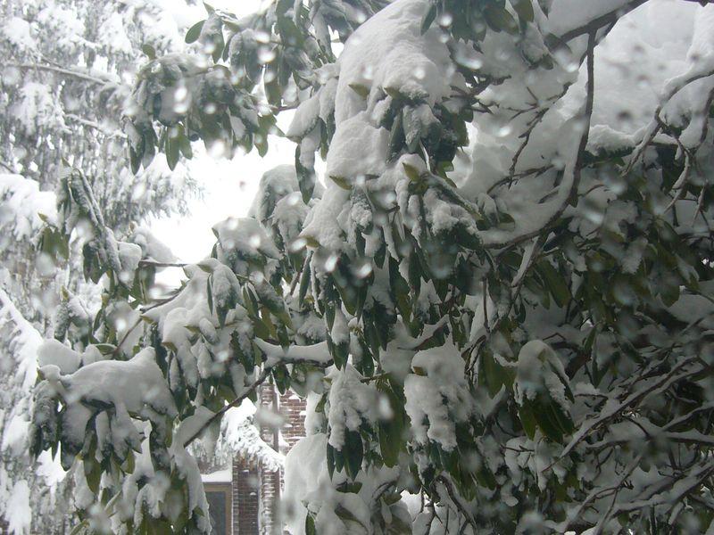 Snow-2011 (19)