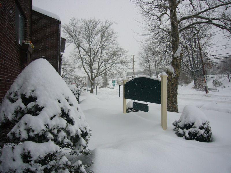 Snow-feb-1-2011 (4)
