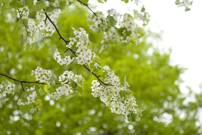 spring, flowers, white flowers, white